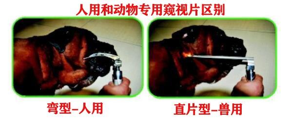 深圳益玛|动物物医疗|益玛宠物|宠物医疗耗材|宠物医生|宠物医院